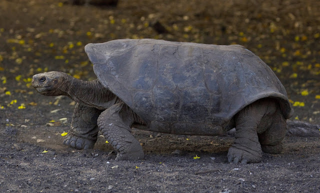 Loss of land-based vertebrates is accelerating, according to biologists