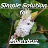 Simple Solution for Mealybug