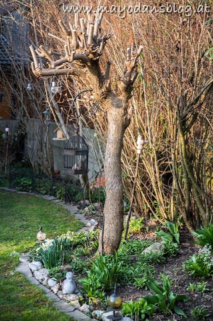 Trompetenbaum nach Rückschnitt