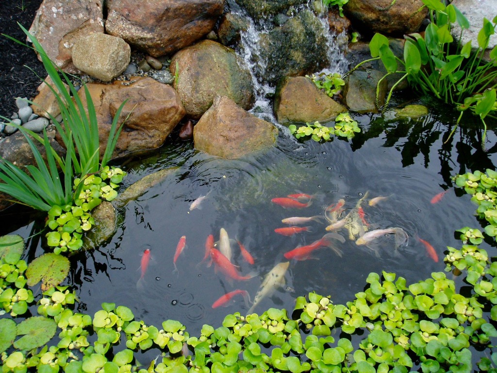 Types of koi pond which one is the best myrokan for Pond design for koi carp