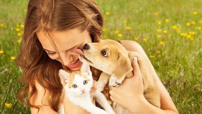 Transmisión bacterías perros besos