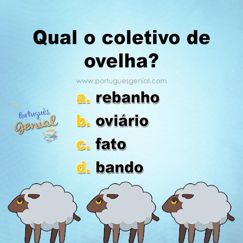 Coletivo de ovelha - Qual o coletivo de ovelha?