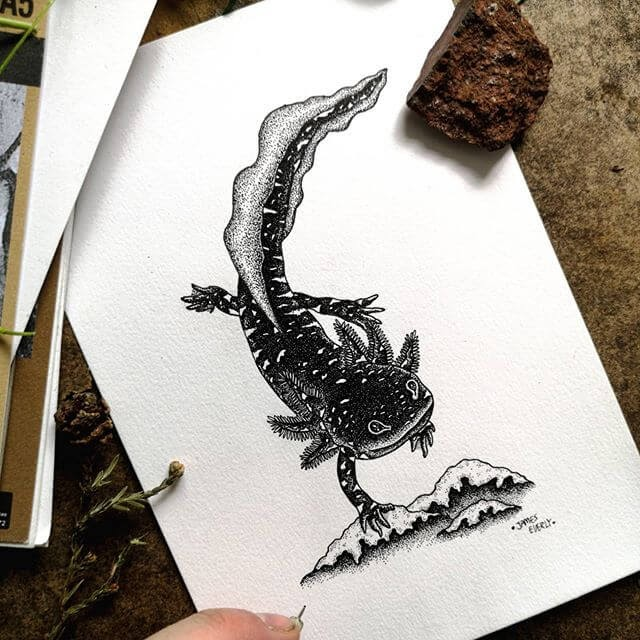 01-Newt-Salamander-Everly-Drawings-www-designstack-co