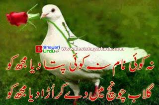 Urdu poetry picture
