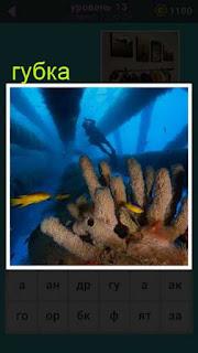 под водой на дне расположена губка и плавает аквалангист 667 слов