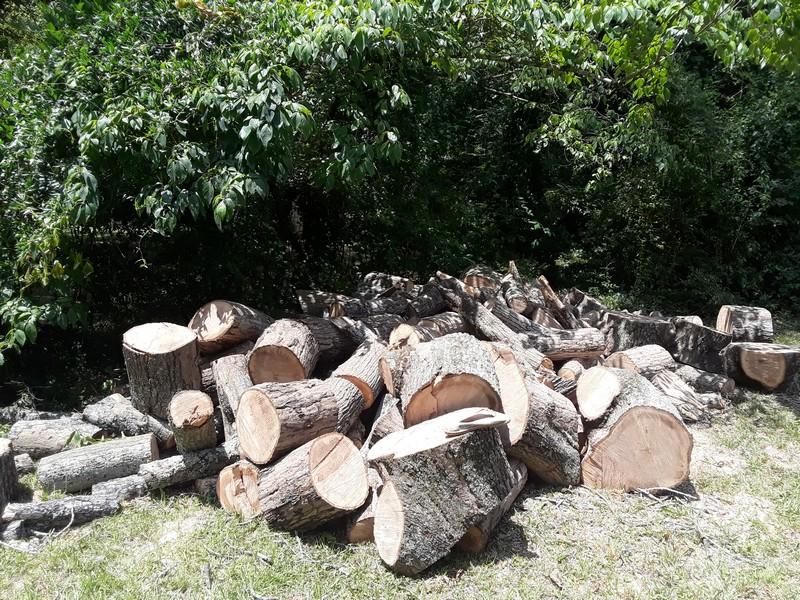 des troncs de bois dans notre jardin