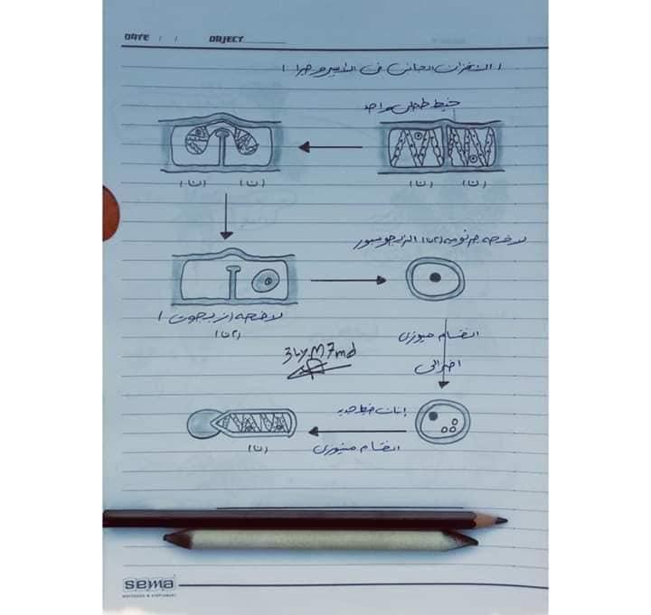 اهم رسومات منهج الاحياء للصف الثالث الثانوي بخط أ/ عماد بدوي 5