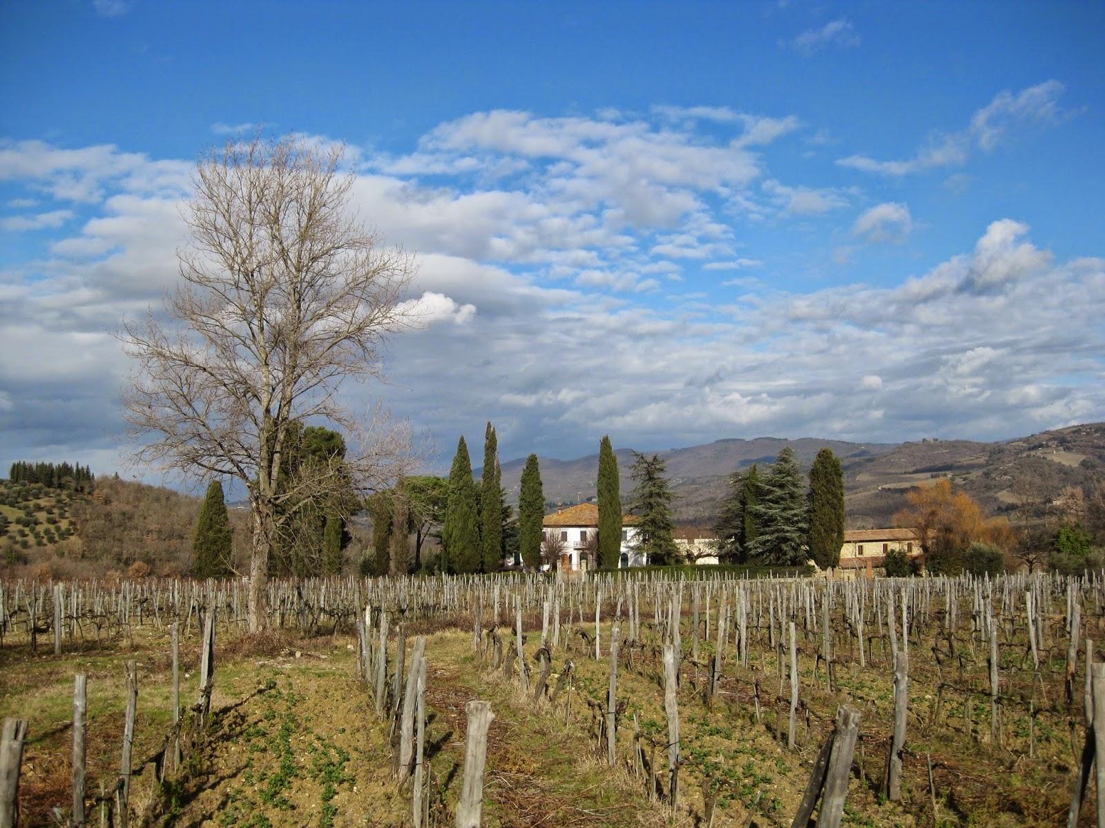 Viñedo en un caracteristico paisaje Toscano