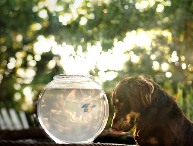 Green Pear Diaries, fotografía, mascotas, Jessica Trinh, Daisy, pastor australiano
