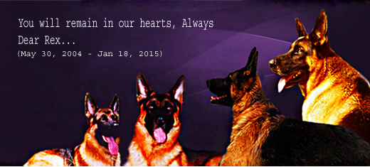 You Will Be In Our Heart - Dear Rex