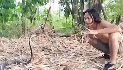 Dede Inoen saat berhadapan dengan king kobra