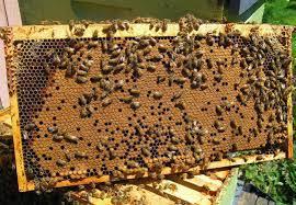 ΣΟΚ. Έδεσε τον 7χρονο γιο του και τον άλειψε με μέλι για να τον τσιμπήσουν οι μέλισσες