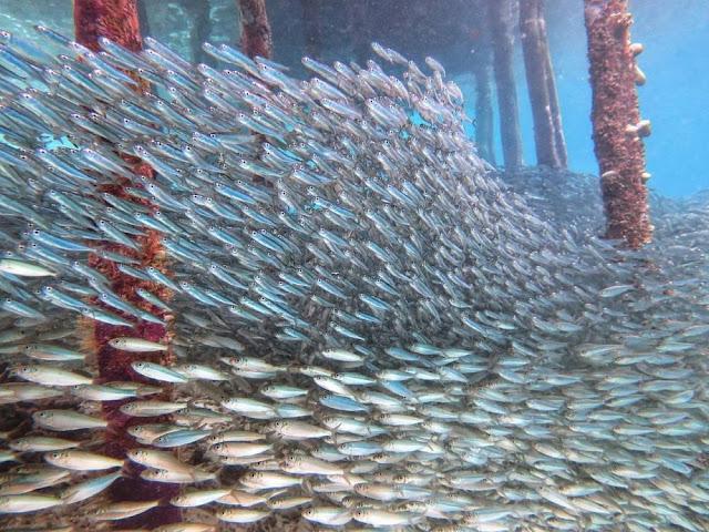 menjaga laut saat pandemi corona