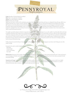 Herbarium: Magical and Medicinal Uses of Pennyroyal