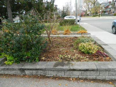 Bedford Park Toronto Fall Cleanup After by Paul Jung Gardening Services Inc.--a Toronto Gardening Company