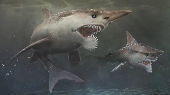 Геликоприон: Акула с циркулярной пилой на нижней челюсти
