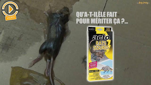 piège à glu acto - souricide - raticide - plaquette à glu - leroy merlin - mon magasin général - rue du cmmerce - cdiscount