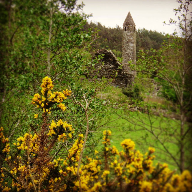 Wicklow Mountains Tour - Gorse and views of the Monastic Settlement at Glendalough