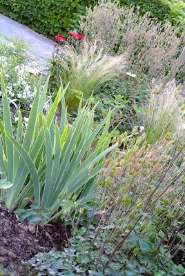 Ultimissime dall 39 orto erbacce margherite e cuoricini for Bordure giardino sempreverdi