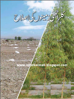 Salt Affected Soils And Their Reclamation PDF