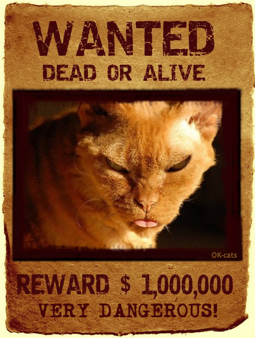 Photoshopped Cat picture • Very dangerous cat WANTED Dead or alive • REWARD $1,000,000