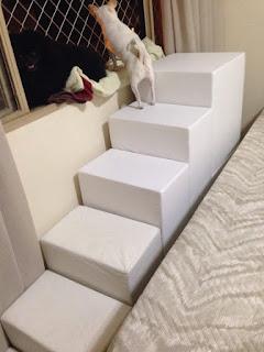 escadas panoramicas para cães