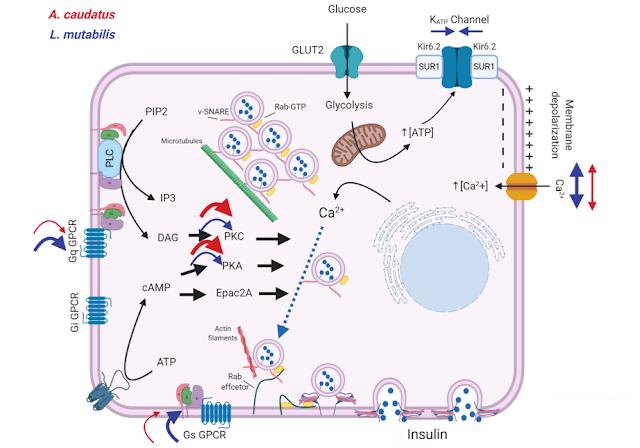 Extracto hidroetanólico en ratas albinas diabéticas