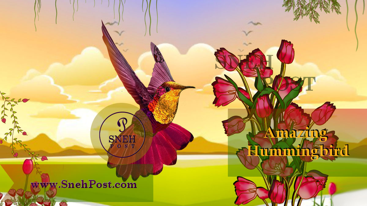 Hummingbirds facts and unbelievable truths about smallest bird of the world: Hummingbird sucking the flower juice in a beautiful garden drawing, opening her colorful shiny feathers while flying