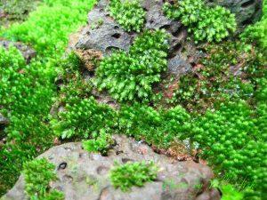 Cách làm một nền Minifiss đẹp cho hồ thủy sinh