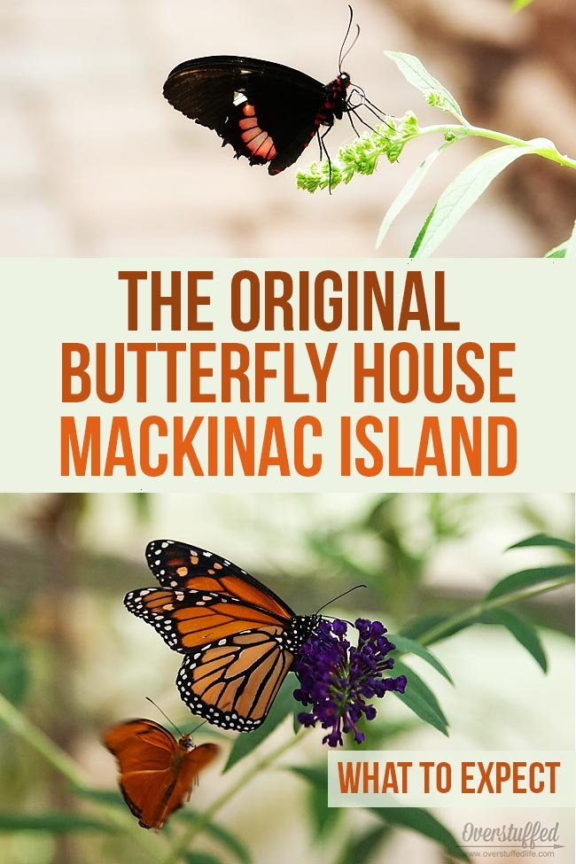 A review of the Original Butterfly House on Mackinac Island. The butterfly house is an affordable fun family activity to do while on the island.
