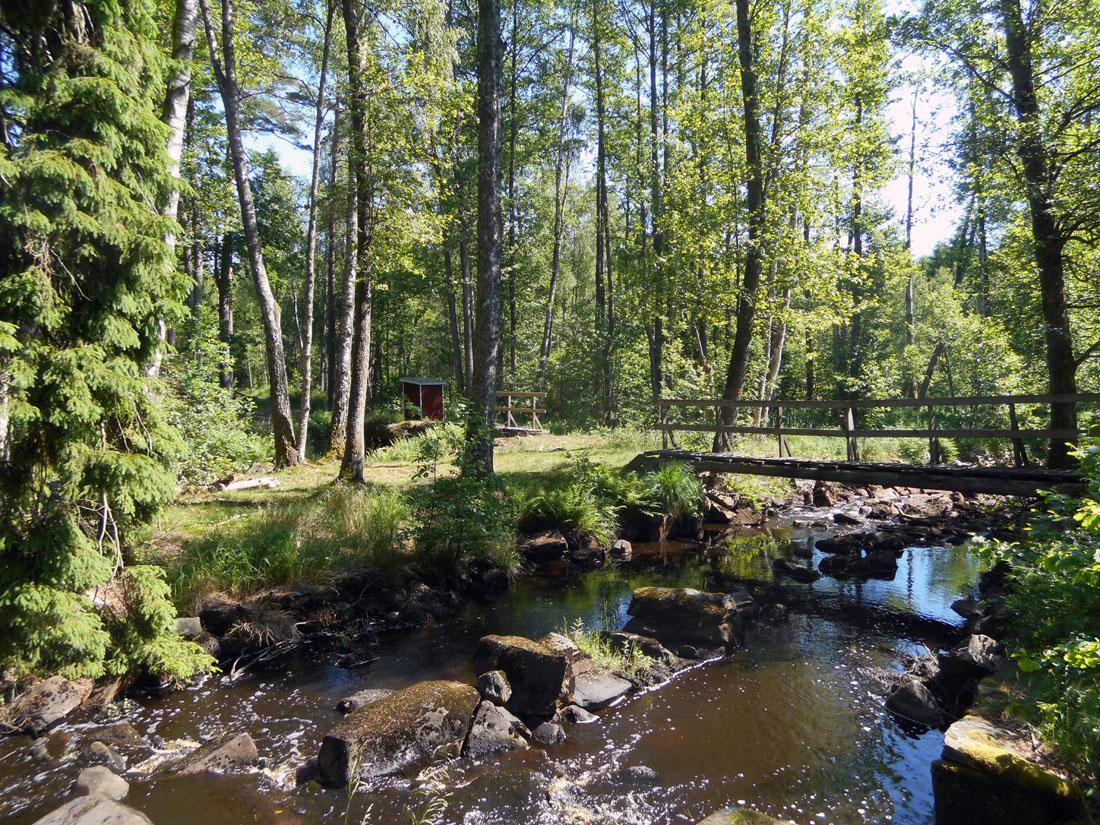 Nei boschi di Östra Göinge
