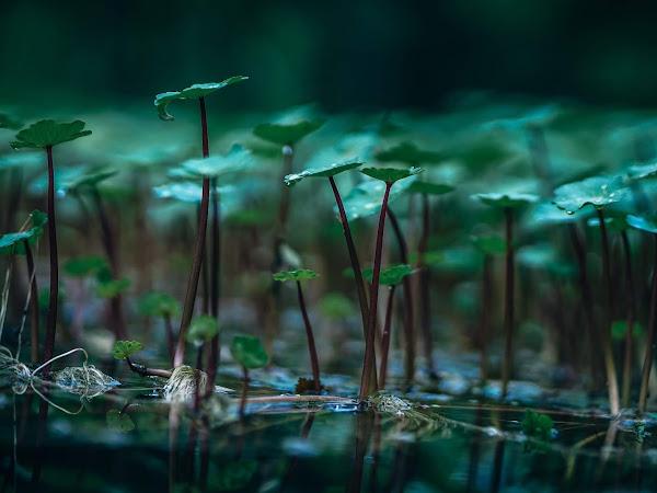 Methods for Controlling Aquatic Weeds