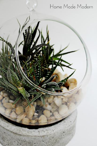 anthropologie knockoff terrrarium
