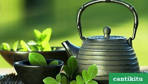 manfaat daun kelor kepada kesehatan
