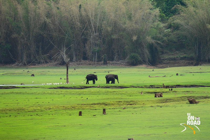 Elephant Family at Kabini National Park, India