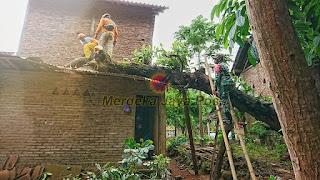 Babinsa Dan Warga Evakuasi Pohon Tumbang Yang Menimpa Rumah Warga