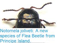 http://sciencythoughts.blogspot.co.uk/2016/01/notomela-joliveti-new-species-of-flea.html