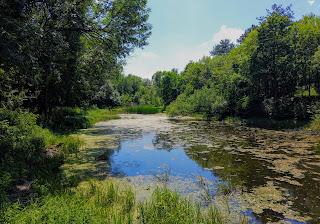 Графское. Великоанадольский лес. Река Кашлагач
