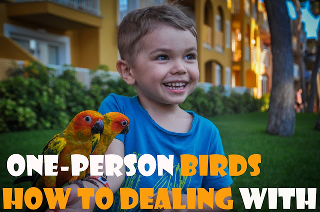birds parrots one person