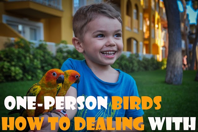 one-person birds how to dealing with