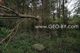 Лес у деревни Братково. Деревья поломанные ураганом