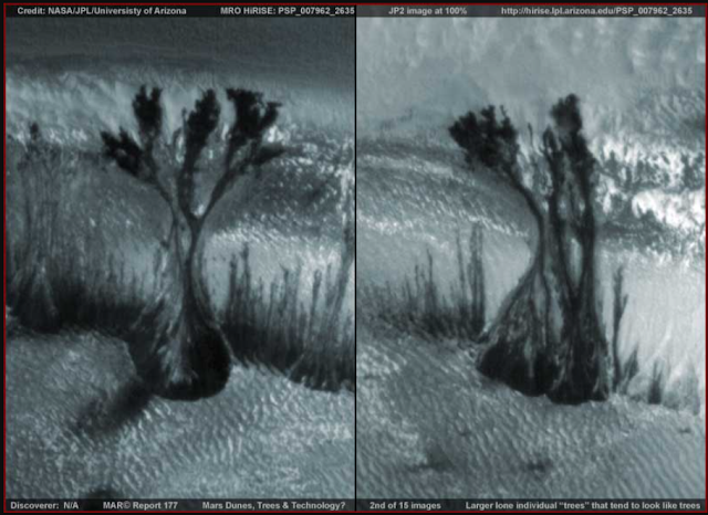 I-look-at-these-and-i-think-trees-on-mars-and-nothing-else
