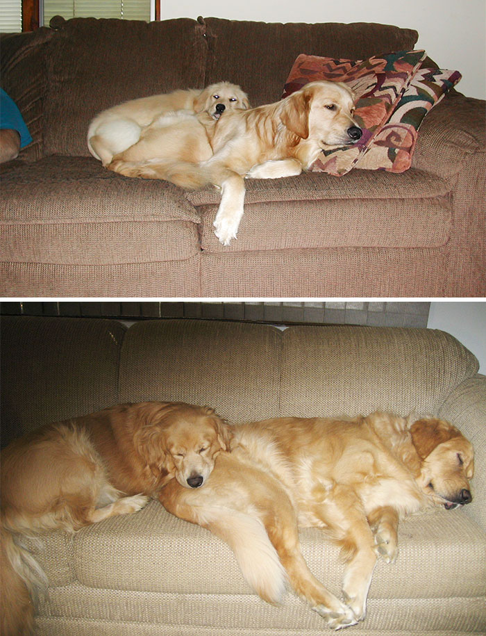 50 Heart-Warming Photos of Animals Growing Up Together - Sharing The Couch Then And Now