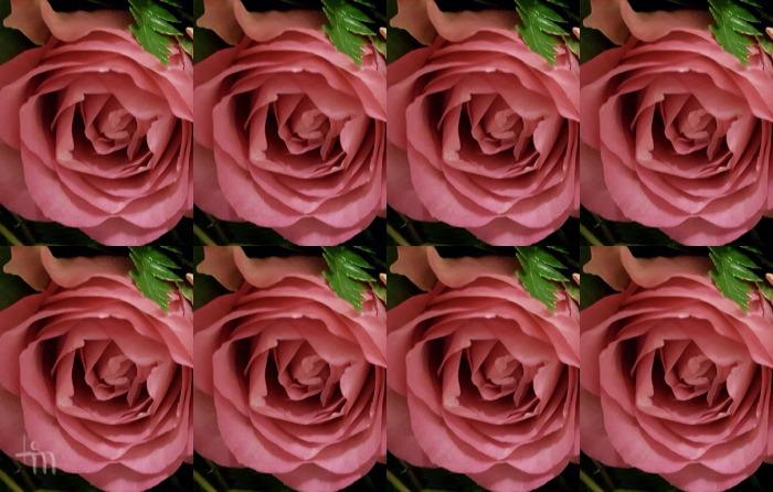 vaaleanpunaiset ruusut Naistenpäivänä 2017