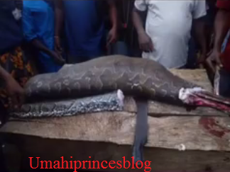 https://umahiprince.blogspot.com/2017/09/photos-python-that-swallowed-antelope.html