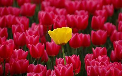 imagenes de flores y rosas, amarillas, rojas
