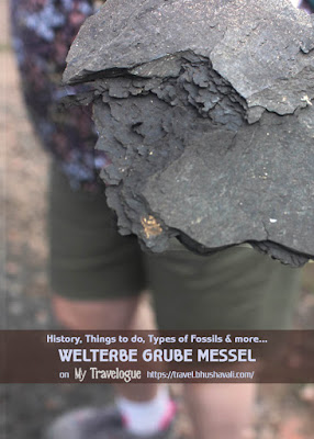 Oil shales Fossils of Welternaturebe Grube Messel