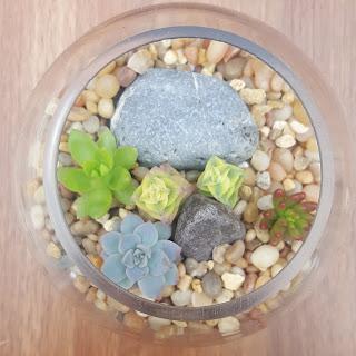 How to make succulent terrarium Step 5