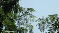 Delicate tree foliage - Elizabeth Park, West Hartford, CT