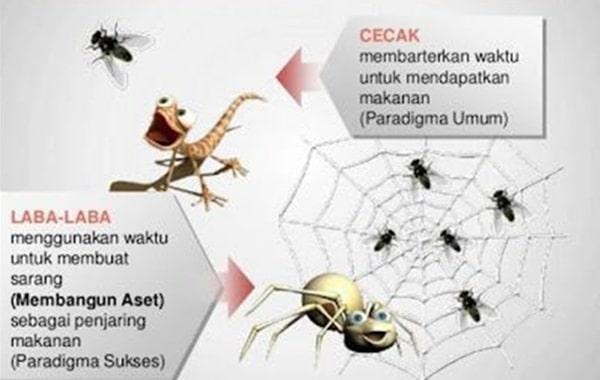 cara bisnis cicak atau laba-laba
